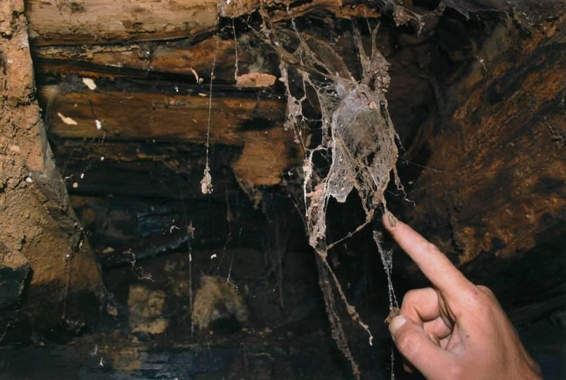 Spinrag en zwarte substantie